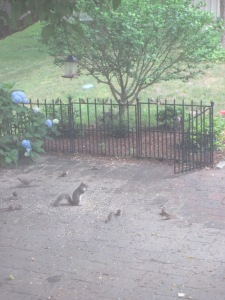 Squirrel gives a speech to Birdy Bunch, while chipmunk munches away.