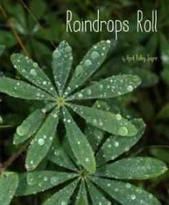 RaindropsRoll