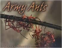 ARMY ANTS.jpg
