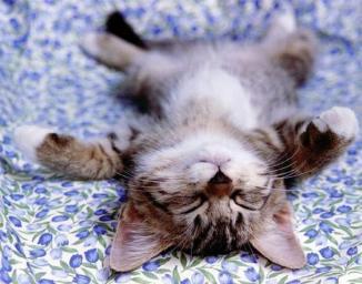 relaxed-kitten