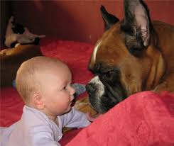 baby and boxer